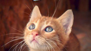 kawaii-female-cat-names