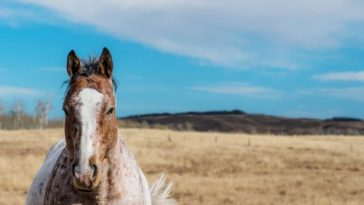 140+ Southern Horse Names For Both Male and Female Horses